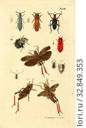 Купить «Bug type 3, Collection of various beetles, signed: Jac., Sturm pinx, et sc, Table III, after p, Sturm, Jacob (pinx. et sc.), Christian Creutzer: Entomologische...», фото № 32849353, снято 1 июня 2020 г. (c) age Fotostock / Фотобанк Лори