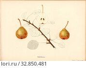 Swallowtail, Swiss pear variety, Signed: Farbendruck v., J. Tribelhorn, Fig. 39, Tribelhorn, J. (imp.), 1863, Schweizerisch. Landwirtschaftl. Verein (Hg... Редакционное фото, фотограф ARTOKOLORO QUINT LOX LIMITED / age Fotostock / Фотобанк Лори