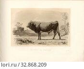 Taurus of Pinzgau, Austrian cattle breed, bull, signed: Nadar jeune, Emile Van Marcke, J. Rebel sculp, Pl. XLIV, S. 105, Tournachon, Adrien Alban (Phot... Редакционное фото, фотограф ARTOKOLORO QUINT LOX LIMITED / age Fotostock / Фотобанк Лори