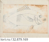 Gerres oyena, Print, The common silver-biddy (Gerres oyena) is a species of mojarra native to marine and brackish waters of coastal waters of the Indian... (2019 год). Редакционное фото, фотограф ARTOKOLORO QUINT LOX LIMITED / age Fotostock / Фотобанк Лори