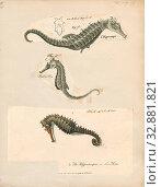 Hippocampus antiquorum, Print, 1700-1880 (2019 год). Редакционное фото, фотограф ARTOKOLORO QUINT LOX LIMITED / age Fotostock / Фотобанк Лори