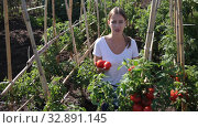 Купить «Young woman gardener holding basket with harvest of fresh tomatoes and peppers in garden», видеоролик № 32891145, снято 12 сентября 2019 г. (c) Яков Филимонов / Фотобанк Лори