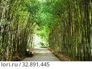Купить «Скамейка в бамбуковом парке», фото № 32891445, снято 28 июля 2019 г. (c) Евгений Ткачёв / Фотобанк Лори