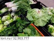 Купить «Various fresh greens at market», фото № 32903777, снято 21 февраля 2020 г. (c) Яков Филимонов / Фотобанк Лори