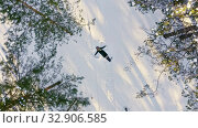 Купить «Girl makes snow angel in clearing in forest. Aerial shoting view of girl happy making by arms snow angel figure and lying in snow. Young woman lying in do in forest», видеоролик № 32906585, снято 29 марта 2020 г. (c) Сергей Тимофеев / Фотобанк Лори