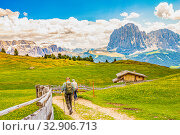 Two elderly men hiking at Seceda peak in the background view of the mountain Sassolungo or Longkofel Traveling to village St. Cristina di Val Gardena, Bolzano, Italy, Dolomites, Trentino alto, Italy. (2019 год). Стоковое фото, фотограф Алексей Ширманов / Фотобанк Лори