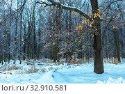 Замерзший лес после ледяного дождя. Стоковое фото, фотограф Евгений Горбунов / Фотобанк Лори