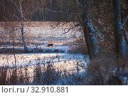 Купить «Dog on the shore of a frozen pond in winter on a sunny day», фото № 32910881, снято 1 января 2020 г. (c) Юлия Перова / Фотобанк Лори