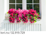 Pots of flowers standing on a windowsill from the street side of the house on a summer sunny day. Стоковое фото, фотограф Акиньшин Владимир / Фотобанк Лори