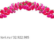 Garland of pink roses. Стоковое фото, фотограф Юлия Бабкина / Фотобанк Лори
