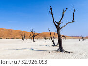 Купить «Namibia, Africa. Deadvlei. Namib Naukluft National Park.», фото № 32926093, снято 4 июня 2019 г. (c) age Fotostock / Фотобанк Лори