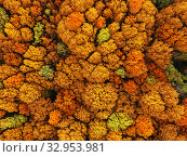 Купить «Natural fall background in an yellow and red colors and leaf texture.», фото № 32953981, снято 6 мая 2018 г. (c) Ярослав Данильченко / Фотобанк Лори