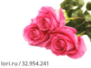 Купить «Bouquet of three pink roses isolated on a white background», фото № 32954241, снято 6 февраля 2017 г. (c) Юлия Бабкина / Фотобанк Лори