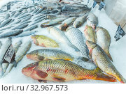 Large selection of fresh fish lying in ice on a supermarket counter. Text in Russian: zander, carp. Стоковое фото, фотограф Акиньшин Владимир / Фотобанк Лори