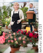 Adult woman is taking care of blooming flowers on her work place. Стоковое фото, фотограф Яков Филимонов / Фотобанк Лори