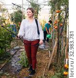 Купить «Woman gardener working with spraying apparatus in greenhouse, boy on background», фото № 32983781, снято 13 августа 2018 г. (c) Яков Филимонов / Фотобанк Лори