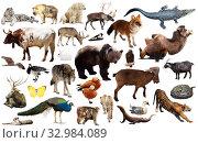 Купить «animal collection asia», фото № 32984089, снято 3 июня 2020 г. (c) Яков Филимонов / Фотобанк Лори
