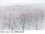 Купить «Aerial view of oak trees in forest in snowfall in cold winter day», фото № 32986929, снято 27 мая 2020 г. (c) easy Fotostock / Фотобанк Лори