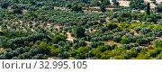 Купить «Plain with olive trees in Cyprus. Top view», фото № 32995105, снято 8 октября 2019 г. (c) Володина Ольга / Фотобанк Лори