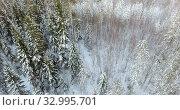 Купить «Winter forest in north, top view from flying drone at coniferous and deciduary forests. Karelia», видеоролик № 32995701, снято 20 января 2020 г. (c) Кекяляйнен Андрей / Фотобанк Лори