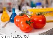 Купить «Tomatoes with lab tools», фото № 33006953, снято 24 января 2019 г. (c) Яков Филимонов / Фотобанк Лори