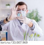 Купить «Male biochemist working in the lab on plants», фото № 33007969, снято 1 марта 2018 г. (c) Elnur / Фотобанк Лори
