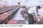 Купить «Chinese woman gardener working in greenhouse», видеоролик № 33013481, снято 20 февраля 2020 г. (c) Яков Филимонов / Фотобанк Лори