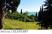Купить «nature in Abkhazia near New Athos in summer», видеоролик № 33019897, снято 2 февраля 2020 г. (c) Володина Ольга / Фотобанк Лори
