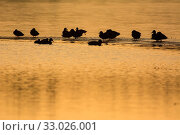 Купить «Enten, Eisfläche, ducks, ice, wildtiere, wildlife, lake, frozen, zugefroren, Natur, winter, nature, animals, wild ducks, Wildenten, Stockenten, mallards», фото № 33026001, снято 25 мая 2020 г. (c) easy Fotostock / Фотобанк Лори