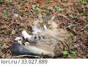 Купить «Пушистые кот лежит в саду на прошлогодних листьях», фото № 33027889, снято 5 мая 2019 г. (c) Наталия Шевченко / Фотобанк Лори