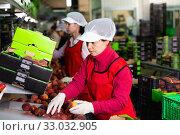 Купить «Focused woman working on fruit sorting line at warehouse, checking quality of nectarines», фото № 33032905, снято 8 июня 2019 г. (c) Яков Филимонов / Фотобанк Лори