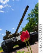 Tulips against the backdrop of a Russian tank. Стоковое фото, фотограф Александр Клёнов / Фотобанк Лори