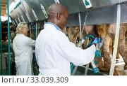 Farm milkmaids man and female with modern cow milking machines. Стоковое фото, фотограф Яков Филимонов / Фотобанк Лори