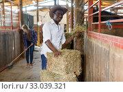 Купить «Man and woman feeding horses with hay», фото № 33039321, снято 2 октября 2018 г. (c) Яков Филимонов / Фотобанк Лори