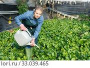 Купить «Woman watering spinach seedling», фото № 33039465, снято 3 октября 2018 г. (c) Яков Филимонов / Фотобанк Лори