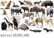 Купить «Collage with African mammals and birds», фото № 33051305, снято 4 июля 2020 г. (c) Яков Филимонов / Фотобанк Лори