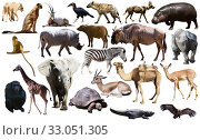 Collage with African mammals and birds. Стоковое фото, фотограф Яков Филимонов / Фотобанк Лори
