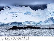 Купить «Two Humback Baleen Whales Chasing Krill Blue Iceberg Floating Sea Water Charlotte Bay Antarctic Peninsula Antarctica. Baleen Whale.», фото № 33067153, снято 26 августа 2019 г. (c) easy Fotostock / Фотобанк Лори