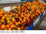 Купить «Tangerines on sorting line», фото № 33067981, снято 24 февраля 2020 г. (c) Яков Филимонов / Фотобанк Лори