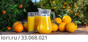 Купить «Jug and glasses of freshly squeezed orange juice with oranges in an outdoor setting during summer», фото № 33068021, снято 25 февраля 2020 г. (c) Яков Филимонов / Фотобанк Лори