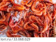 Купить «Raw shrimps on crushed ice», фото № 33068029, снято 23 февраля 2020 г. (c) Яков Филимонов / Фотобанк Лори