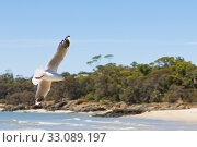 Купить «seagull spreads its wings on the beach», фото № 33089197, снято 7 апреля 2020 г. (c) PantherMedia / Фотобанк Лори