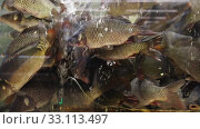 Image of live fish carp in aquarium for sale in supermarket. Стоковое видео, видеограф Яков Филимонов / Фотобанк Лори