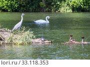Купить «grebes and herons 2,gray heron and crested grebe 2,», фото № 33118353, снято 4 июля 2020 г. (c) PantherMedia / Фотобанк Лори