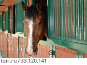 horsehead peeping out the stables. Стоковое фото, фотограф Alfred Hofer / PantherMedia / Фотобанк Лори