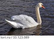 Купить «swan on the neckar», фото № 33123089, снято 31 мая 2020 г. (c) PantherMedia / Фотобанк Лори
