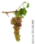 Купить «White grapes», фото № 33136489, снято 21 февраля 2020 г. (c) PantherMedia / Фотобанк Лори