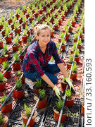 Female owner of glasshouse growing rosemary. Стоковое фото, фотограф Яков Филимонов / Фотобанк Лори