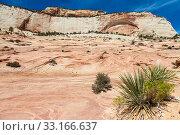 Zion National Park. Стоковое фото, фотограф Paolo Gallo Modena / PantherMedia / Фотобанк Лори