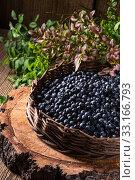 Купить «european blueberry», фото № 33166793, снято 27 мая 2020 г. (c) PantherMedia / Фотобанк Лори